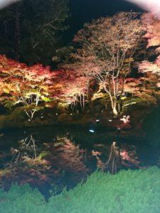 秋に気をつけることᐠ( ´ᐞ` )