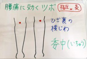 ◆腰痛に委中(いちゅう)◆