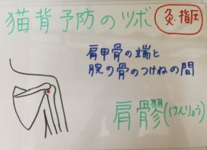 ◆猫背予防に肩髎(けんりょう)◆