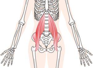 ◆腰痛解消にはこの筋肉!-その1-◆