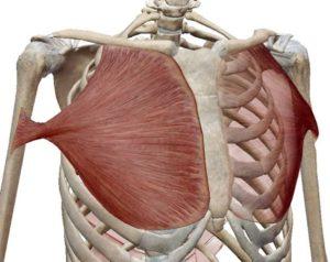 ◆呼吸力アップにはこの筋肉-その2!◆